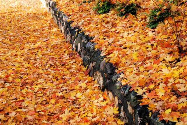Sidewalk_Leaves_Claiborne house bed and breakfast_blog.jpg