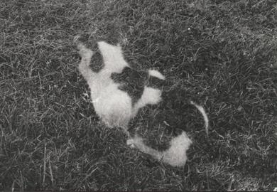 Thumbnail image for Ghost Cat.JPG
