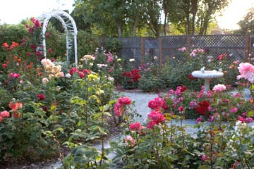 صور اجمل حدائق الورد 2013 ، صور حدائق الزهور 2013 ، صور حدائق ورد 2013 pix7.jpg